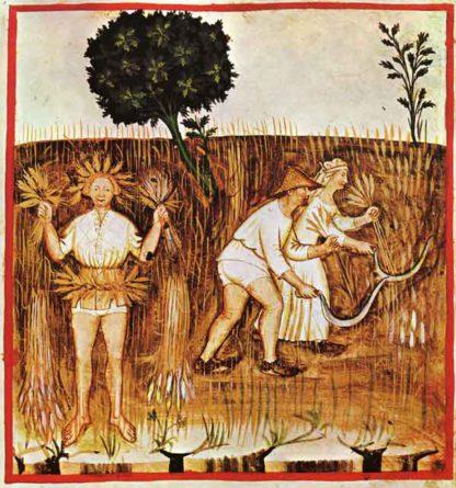 Estate, Ibn Buthlan di Baghdad,Tacuinum_Sanitatis_colorato e miniato da Giovannino de Grassi, 1390-1400