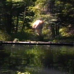 Bill Viola-The Reflecting Pool, 1977/1979