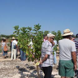 Apertura al pubblico del conservatorio botanico Pomona